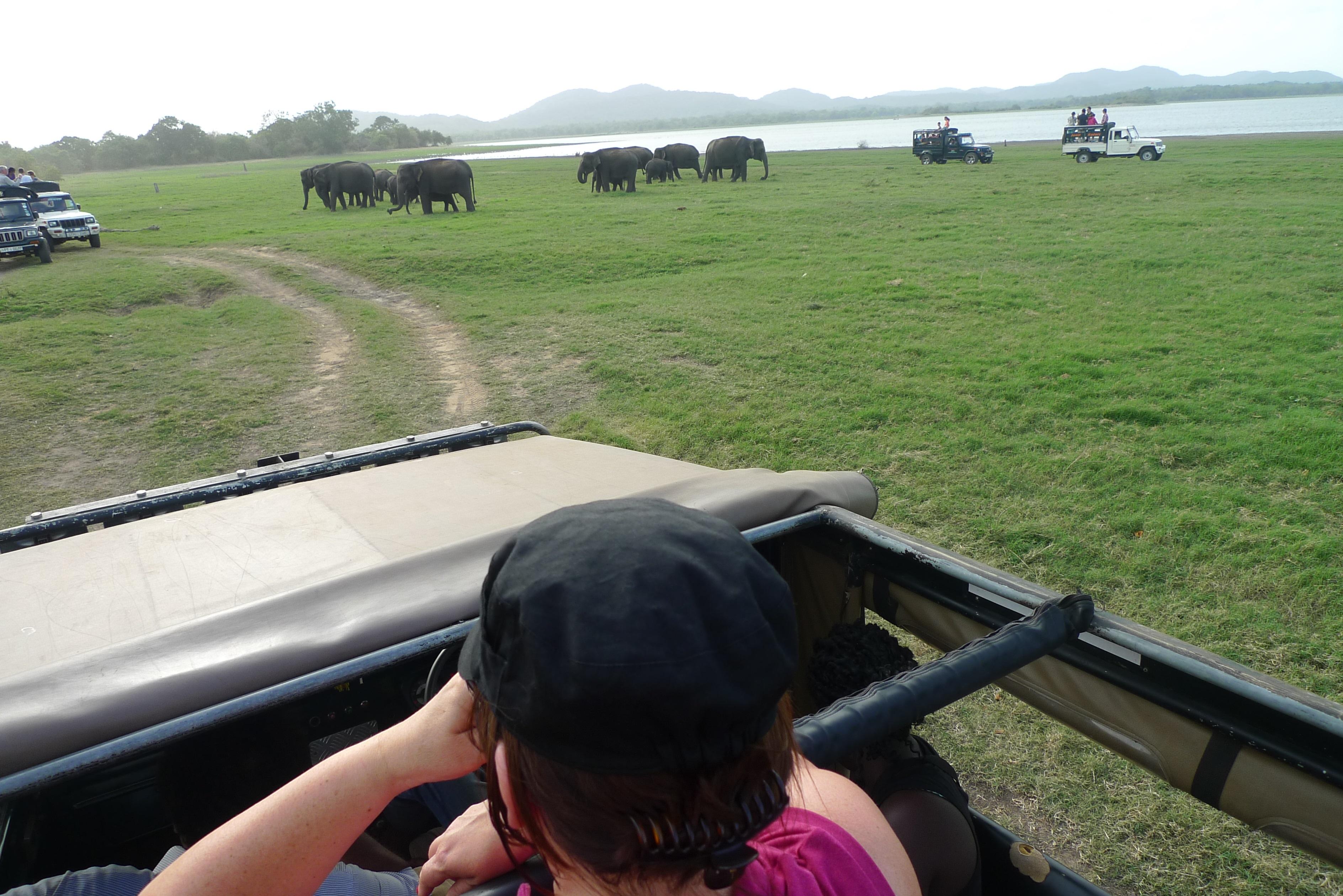 Martelle safari